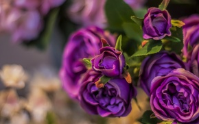 Picture flowers, roses, artificial flowers