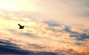 Picture the sky, freedom, clouds, flight, background, widescreen, bird, Wallpaper, mood, wings, Seagull, silhouette, wallpaper, sky, ...