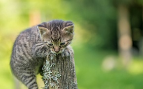 Picture kitty, background, small