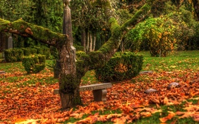Picture autumn, leaves, tree, cemetery, monuments