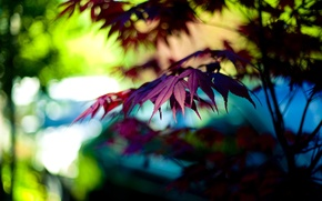 Picture purple, macro, light, trees, branches, background, tree, widescreen, Wallpaper, leaf, wallpaper, leaf, widescreen, background, bokeh, …