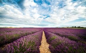 Picture the way, horizon, lavender, lavender, horizon, path, field of lavender, lavender field