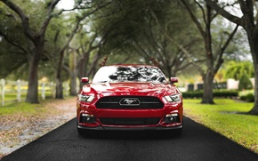 Picture road, trees, lights, horse, the fence, Mustang, Ford, front, farm