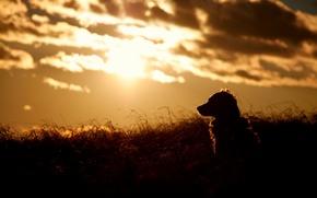 Wallpaper sunset, nature, dog