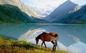 Picture mountains, shore, horse
