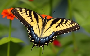 Picture pattern, butterfly, wings, insect, moth