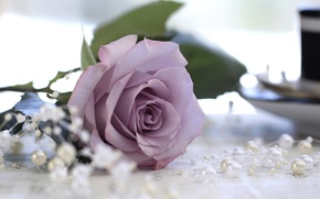 Picture macro, rose, beads