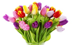 Picture flowers, flowers, vase, beauty, red, colorful, yellow, Tulips, lilac, white, pink, vase, petals, bouquet, yellow, ...