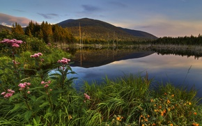 Picture forest, grass, trees, sunset, flowers, mountains, lake, Canada, Quebec