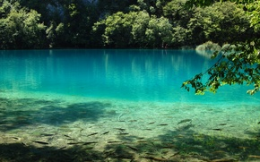 Picture water, fish, nature, lake, blue, Plitvice Lake