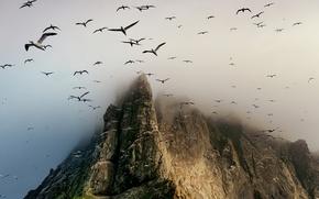 Wallpaper birds, rock, mountain, Scotland, St. Kilda archipelago, Boreray Island