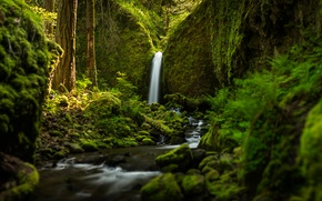 Picture forest, waterfall, river, Oregon, Ruckel Creek Falls