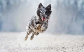 Picture jump, dog, running