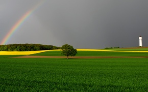 Wallpaper field, rainbow, the sky, tower, tree
