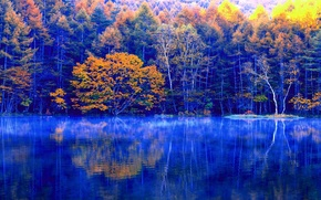 Picture autumn, forest, trees, lake, reflection