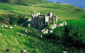 Picture sea, grass, trees, castle, sheep, slope, the ruins