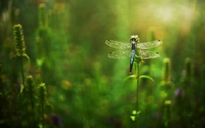Picture flowers, grass, dragonfly