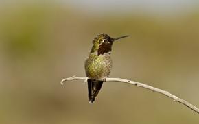 Picture eyes, branch, beak, Hummingbird, eye, branch, hummingbird, beak