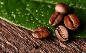 Wallpaper macro, sheet, coffee, grain, macro, leaf, beans, coffee