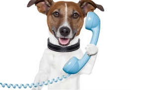 Picture dog, muzzle, phone, dog, phone, Jack Russell Terrier