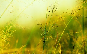 Picture macro, green, background, widescreen, Wallpaper, vegetation, plant, blur, wallpaper, widescreen, background, macro, fon, full screen, ...