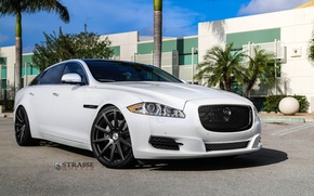 Picture Jaguar, Edition, XJL, Portfolio
