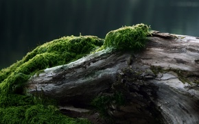 Picture tree, moss