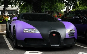 Wallpaper trees, machine, lilac, street, sport, veyron, Parking, bugatti, Kar, black, cars.