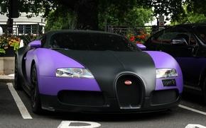 Wallpaper veyron, Kar, Parking, sport, bugatti, trees, lilac, machine, street, cars., black