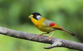 Picture birds, nature, bird, branch, bird