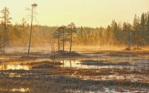 Picture landscape, nature, morning