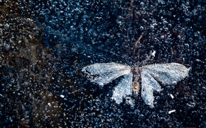 Picture ice, butterfly, air bubbles
