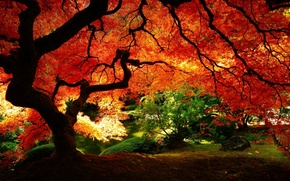 Wallpaper nature, yellow leaves, autumn, red, garden