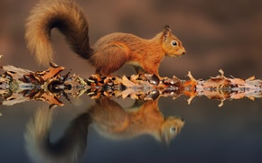 Picture water, reflection, foliage, protein, autumn