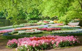 Picture trees, flowers, pond, Park, Netherlands, Keukenhof Gardens