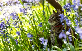 Picture cat, flowers, nature, bells