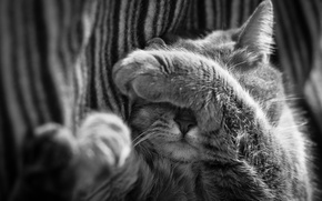 Picture cat, cat, nose, sleeping, black and white, foot