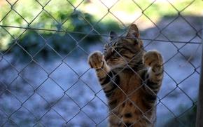 Picture cat, mustache, the fence, legs, Koshak, Tomcat
