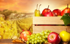 Picture autumn, apples, harvest, grapes, fruit, box, pear