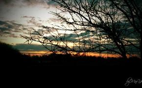 Picture sunset, night, tree, night tree, Tree