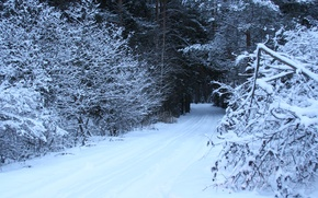 Picture cold, winter, road, forest, snow, trees, nature, frost, background.Wallpaper