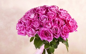 Picture bright, roses, bouquet, colorful, pink, flowers, bouquet, roses, chic