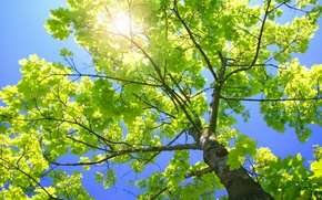 Picture branches, nature, foliage, trunk, green tree