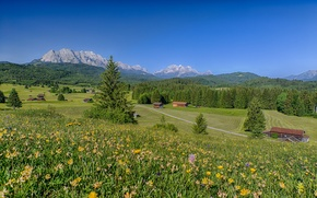 Picture flowers, meadows, Bayern, Alps, mountains, Bavaria, Germany, Germany, home, landscape, Alps, forest