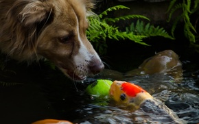 Picture face, water, fish, dog, muzzle, dog, mood.