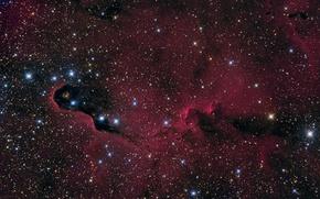Picture space, nebula, nebula, Elephant's Trunk