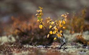 Picture autumn, leaves, macro, tree, earth, moss