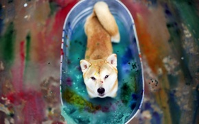 Picture look, color, dog