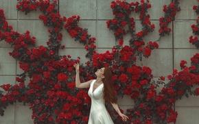 Wallpaper girl, flowers, face, pose, wall, dress
