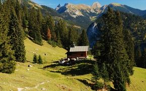 Picture landscape, mountains, nature, house, Germany, Bayern, Hohenschwangau